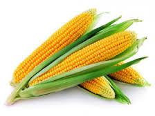 Насіння Кукурудзи Pioneer