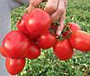 АПГРЕЙТ F1 - томат детерминантный, Esasem 1 000 семян