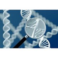 Генетический анализ