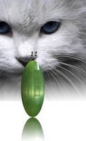 """Гель-лак RNK """"cats eye"""" №011"""
