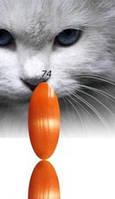 """Гель-лак RNK """"cats eye"""" №074"""