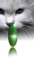 """Гель-лак RNK """"cats eye"""" №077"""