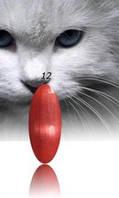 """Гель-лак RNK """"cats eye"""" №012"""