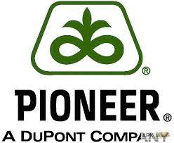 Семена подсолнечника пионер
