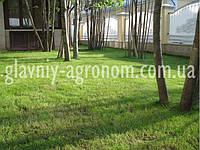 Семена трава для газона теневыносливая (1 кг упаковка)