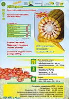 ДН Берека семена кукурузы Маис