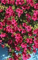 Семена Петуния Сурфиния Даймонд Парпл F1, 50 семян Cerny Seed, фото 1