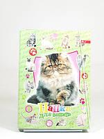 Папка для тетрадей картон на резинке обьемная(для девочек)