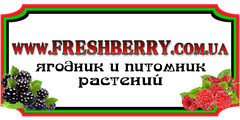 "Интернет-магазин ""Freshberry"""