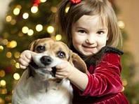 Профессиональная дрессировка и воспитание щенков