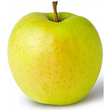 Яблуня Мутса, фото 2