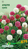 """Семена цветов Армерия широколистная смесь, многолетнее 0,05 г, """" Елітсортнасіння"""",  Украина"""