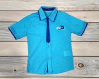 Рубашка с коротким рукавом на мальчика  светло-голубая Турция 1-4 года (86 см, 92 см, 98 см, 104 см)