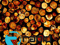 Экспорта дров из Украины за 9 мес.