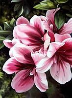 Картины по номерам Розовая лилия