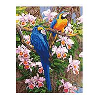 Рисование по цифрам Яркие попугаи 2