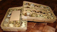 Упаковка для  перепелиных яиц на 20 и 40 шт, выполнена в виде корзинки из экологически чистой древесины