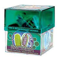 Детский набор Professor EIN-O Бактерия (BACTERIA) от 7 лет ТМ COG E2371BA