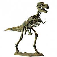 Детский набор Professor EIN-O Скелет динозавра ― Тираннозавр (T-Rex Big Dino) от 7 лет ТМ COG D501