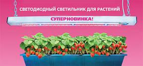 Светодиодные фитолампы помогают вырастить любое растение без естественного освещения