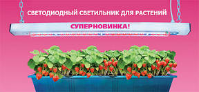Світлодіодні фитолампы допомагають виростити будь-яку рослину без природного освітлення