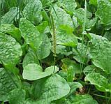Мыло для рук питательный увлажняющее смягчающе Natur Active Витэкс (Беларусь) 500мл RBA /19-25, фото 8