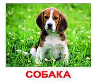 """Набор карточек """"Домашние животные"""" с фактами, фото 1"""
