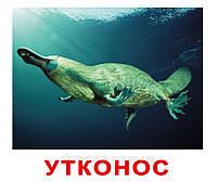 """Набор карточек  """"Экзотические животные"""" с фактами , фото 1"""