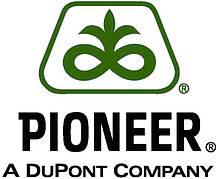 Семена кукурузы Pioneer ( Пионер )