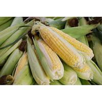 Гибрид кукурузы НС-400