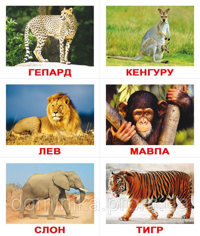 Парно з тваринами показати