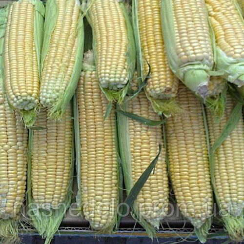 ЛЗ 1010 кукурудза 2500 сем. Ларк Сідс