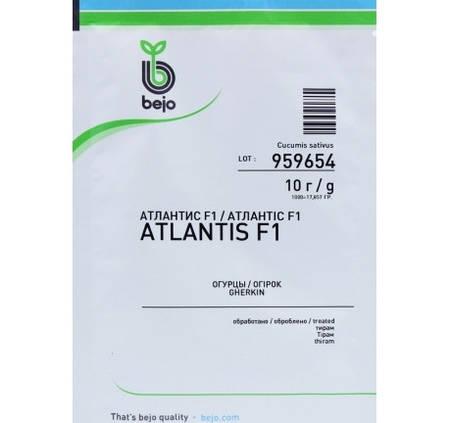 Семена огурца Атлантис F1 / Atlantis F1 (Бейо / Bejo) 25 000 семя - пчелоопыляемый, ранний гибрид (42-45 дней), фото 2