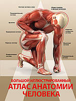 . Большой иллюстрированный атлас анатомии человека