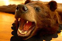 Шкура медведя из канадского аукциона, медвежьи шкуры ковры