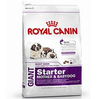 Royal Canin (Роял Канин) GIANT STARTER - первый твердый корм для щенков гигантских пород, 4кг