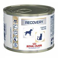 Royal Canin RECOVERY консервы - лечебный корм для собак и кошек в период после болезни, 195г