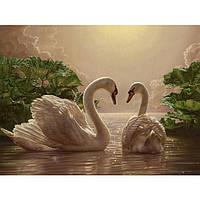 Картина по номерам на холсте Животные,птицы  Пара лебедей 40*50см, КН301