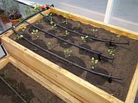 Как ухаживать за рассадой в открытом и закрытом грунте