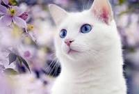 Кое-что из жизни кошек ...