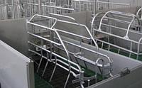 Станки для опороса и осеменения свиноматок