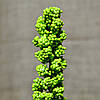Ветка с салатовыми шариками KWL-258