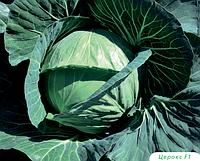 Семена капусты Церокс F1 (Бейо / Bejo) 2500 семян - средне-поздняя (80 дней), белокочанная.