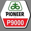 Семена кукурузы (Пионер) P9000