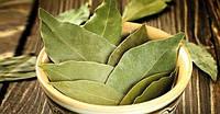 Лавровий лист – лікарські та кулінарні здібності рослини
