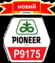 Семена кукурузы (Пионер) P9175 AQUAmax