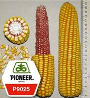 Семена кукурузы (Пионер) P9025