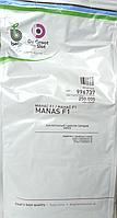 Семена лука Манас F1 (Бейо / Bejo) 250 000 семян - среднепоздний (110-115 дней), желтый, круглый, репчатый.