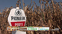 Семена кукурузы (Пионер) P9911 AQUAmax