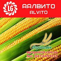 Кукуруза ААЛВИТО (AALVITO), Limagrain